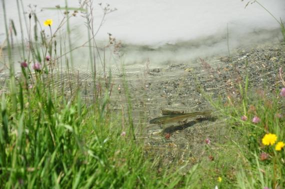truite riviere blanche lac tueda