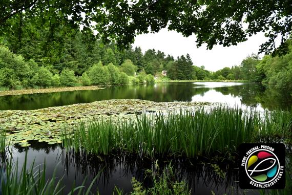 paysage étang