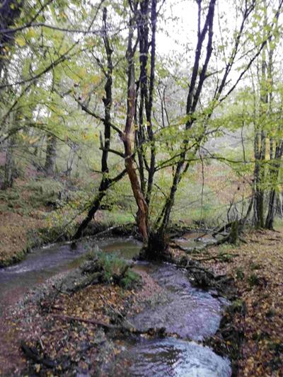 rivirere ruisseau en france
