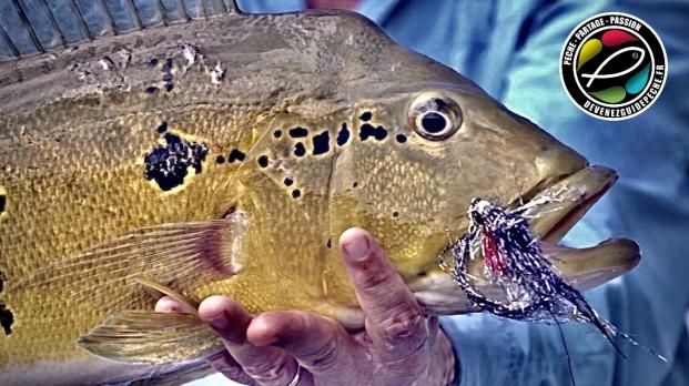 peacock bass fly fishing malbran fly